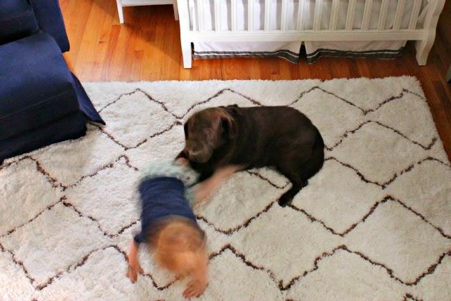creamy u0026 dreamy new moroccan shag rug