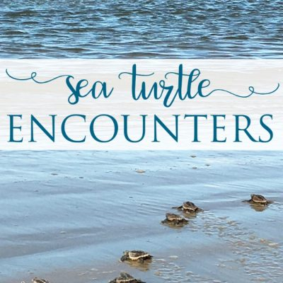Sea Turtle Encounters
