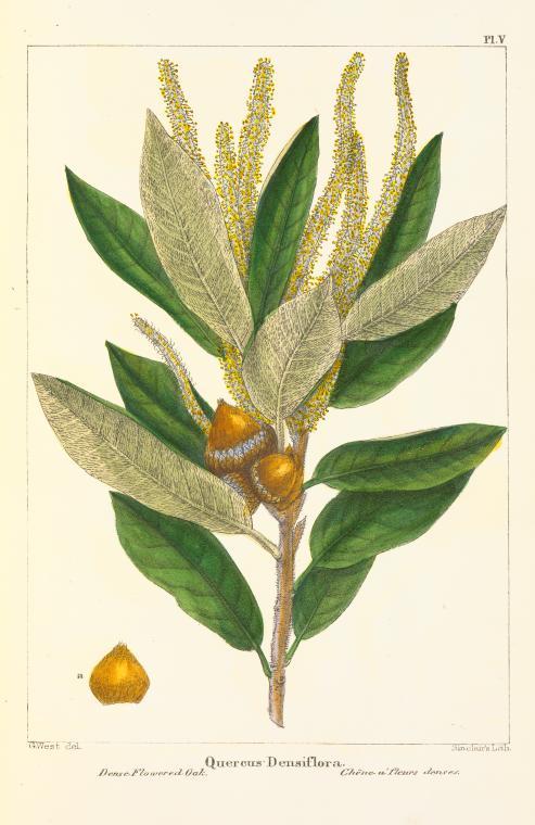 free printable fall botanical prints southern state of